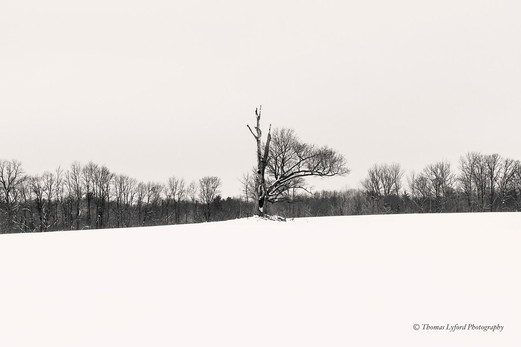 Allegan-tree-bw-web.jpg