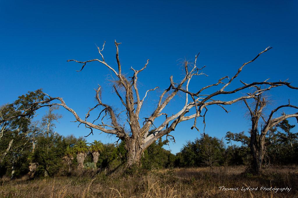 Paula's Tree