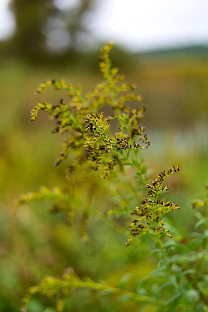 Paw Paw Prairie Fen Preserve